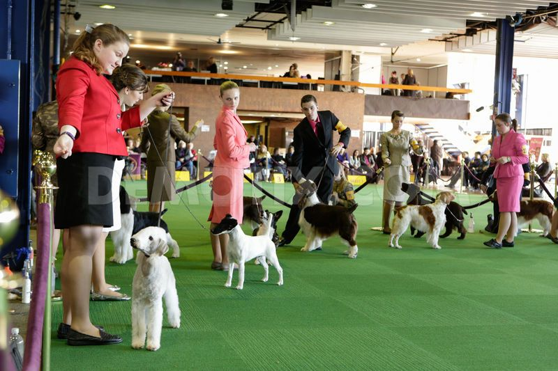 Dog Judging at the Junior Fair