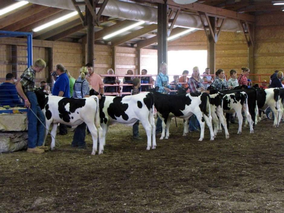 Market Beef Junior Fair