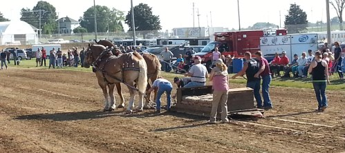 Horse Pull at the Dodge County Fair