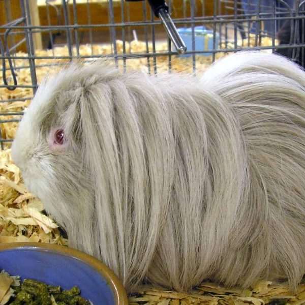 [canceled] Cavies Project Meeting