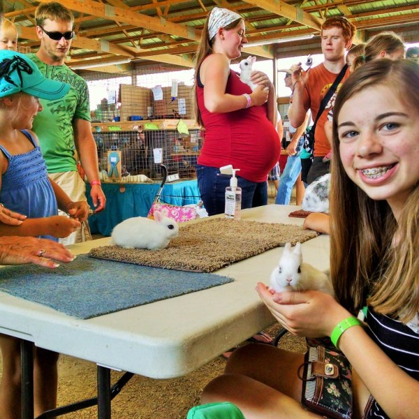Kit rabbits attract attention at Dodge County Fair