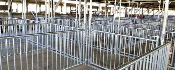 Deadline approaches for Dodge County Fair pig-barn fundraiser