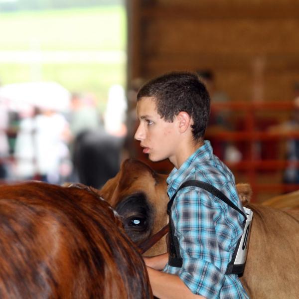 Junior Fair Market Beef and Showmanship Judging