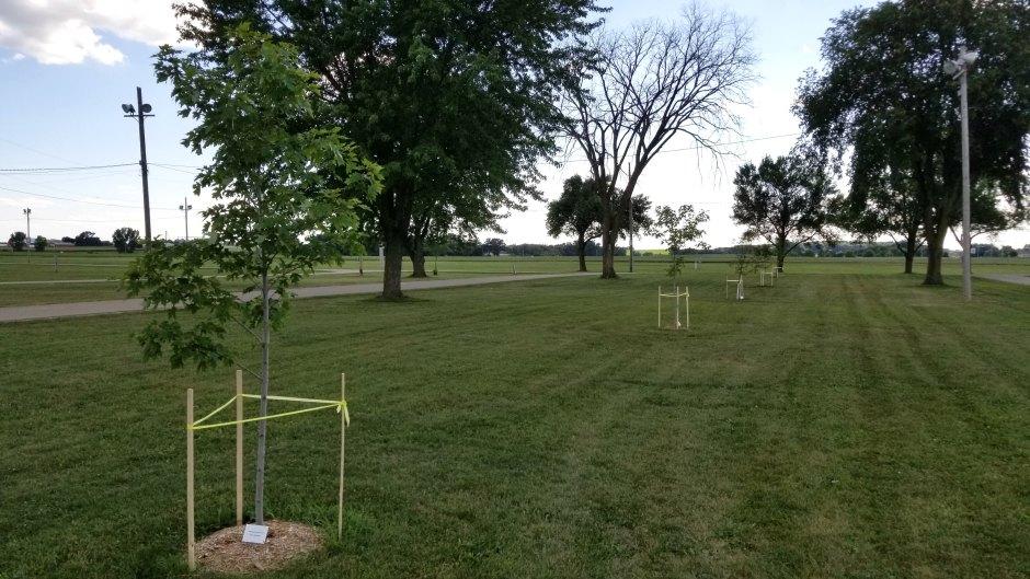 Plant Shade Tree Sponsorship Memorial