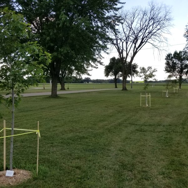Donate a Shade Tree for the Dodge County Fair