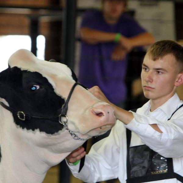 Wisconsin Holstein shows scheduled in Dodge County