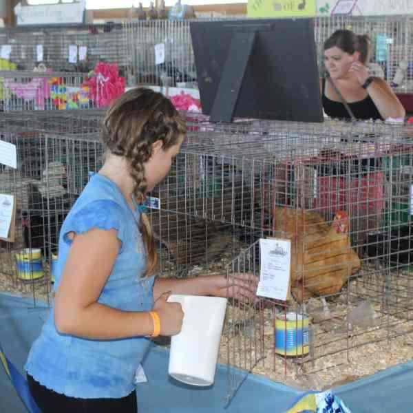 Junior Fair Poultry Judging