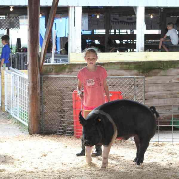 Junior Fair Market Hog Show