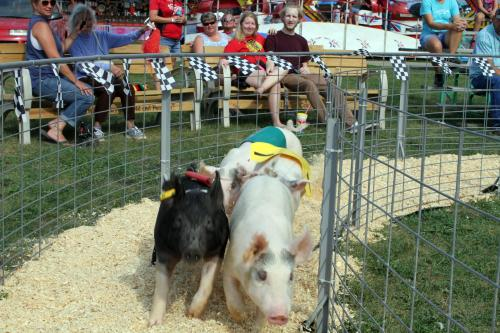 Wisconsin Festival Pig Races