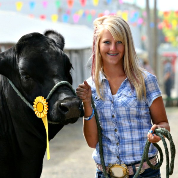 Junior Fair Beef Breeding and Feeder Calves Judging