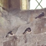 Chicks - High up at Doune