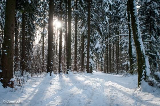 Wald mit Schnee