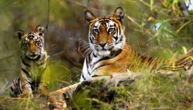 Wildlife safari life india