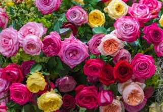 Roses In Garden