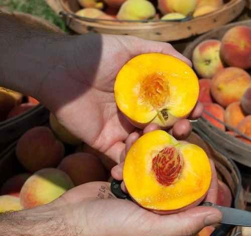 Fruit Operator