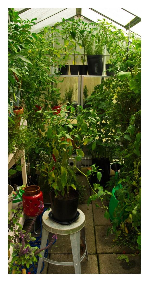 Inuti mitt växthus!