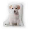 Labrador Photo Pillow