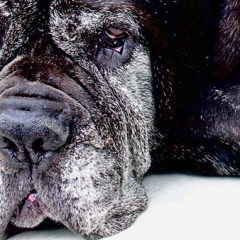 Public-domain-dog.jpg