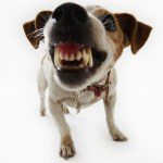 Can you finish this stupid dog joke?