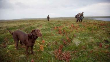 dog-winth-hunters-hunting_w725_h483.jpg
