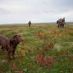 dog-winth-hunters-hunting_w725_h483.jpg