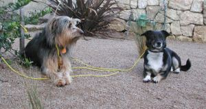 StarMark Clicker Dog Training System