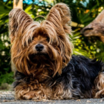 Did you know your dog attracts these pests?