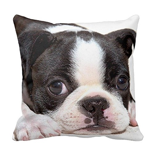 Getting Rid of the Need For Boston Terrier Rescues!