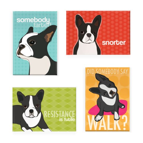 How To Get Boston Terrier Grooming Right