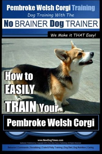Pembroke Welsh Corgi Puppy And Dog Information