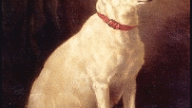 English_White_Terrier.png