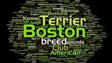 boston-terrier2074.jpg