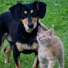 cat-and-dog.jpg