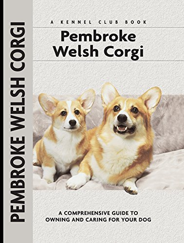 Pembroke Welsh Corgi Video: Pembroke Welsh Corgi winning his Agility Class