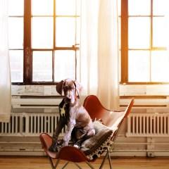 dog-2871914_1280