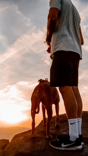 How To Plan For A Hiking Adventure With Your Dog