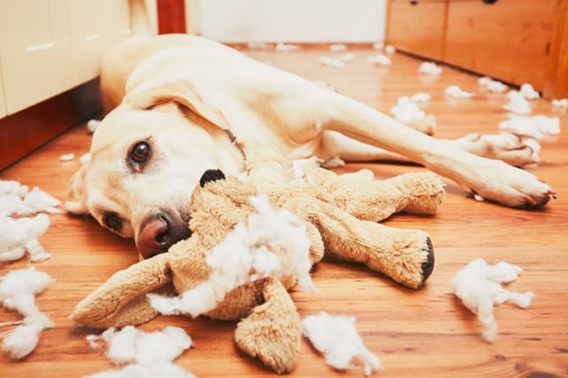 Many Things to Consider When Buying Dog Toys
