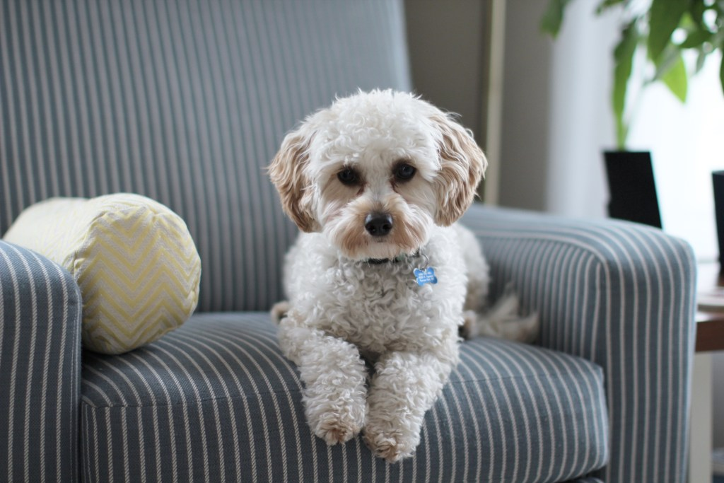 Steps To A 100% Safe Home for Your Dog