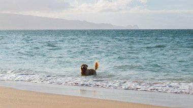 kennel-hawaii