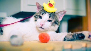 Kitty-ready-for-bath