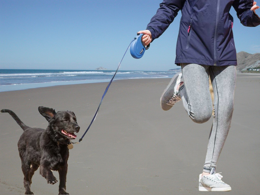 Spring and Summer Activities with Your Dog