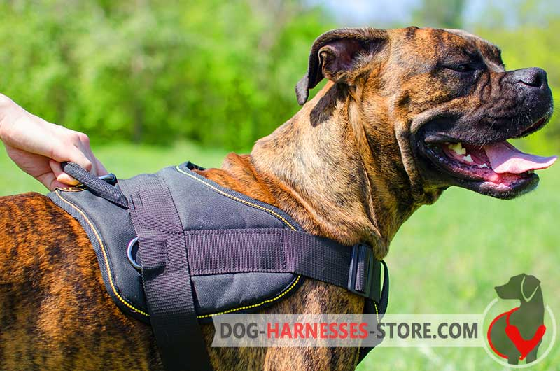 Multifunctional Boxer Harness For Walking And Training