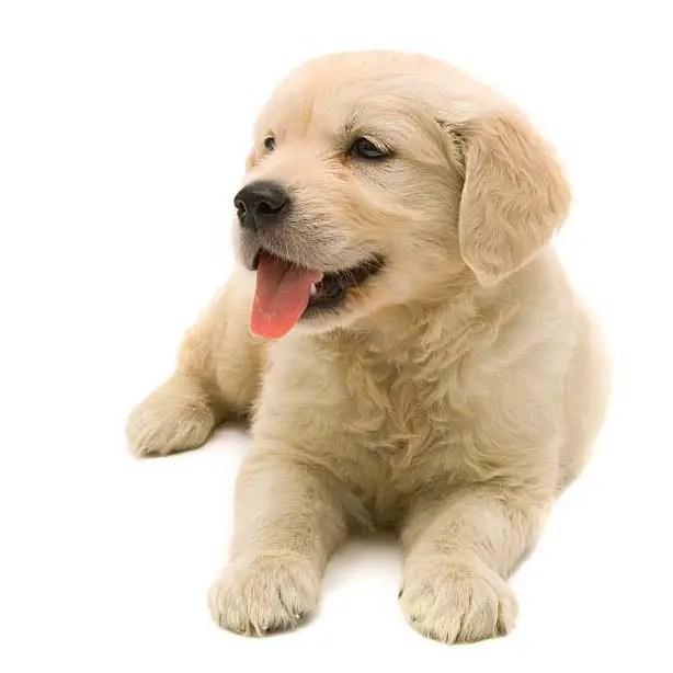 Male Dogs Potty Training