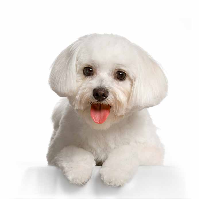 White Dog Names For Light Colored Males Amp Female Dogs