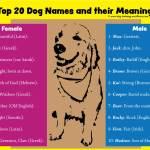 1001 Best Dog Names For Smart Pets