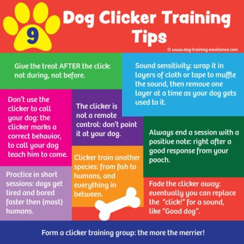 23 Free Dog Clicker Training Tips for Best Results