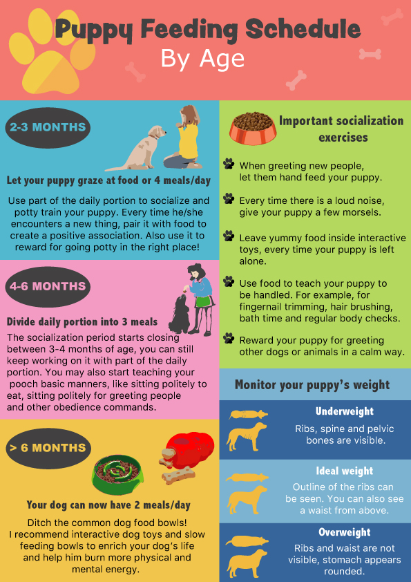 puppy feeding chart by age, puppy feeding schedule, how many times a day should I feed my dog