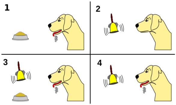 El perro de Pavlov: ¿lo has escuchado? - Dogalize
