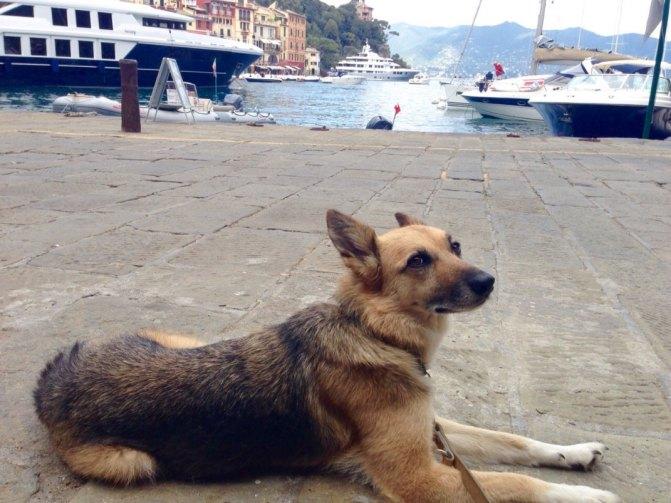 Dogsitter petsitter milano