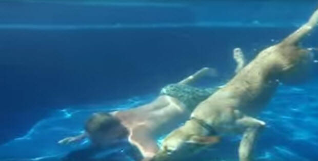 diving-labrador-pool1